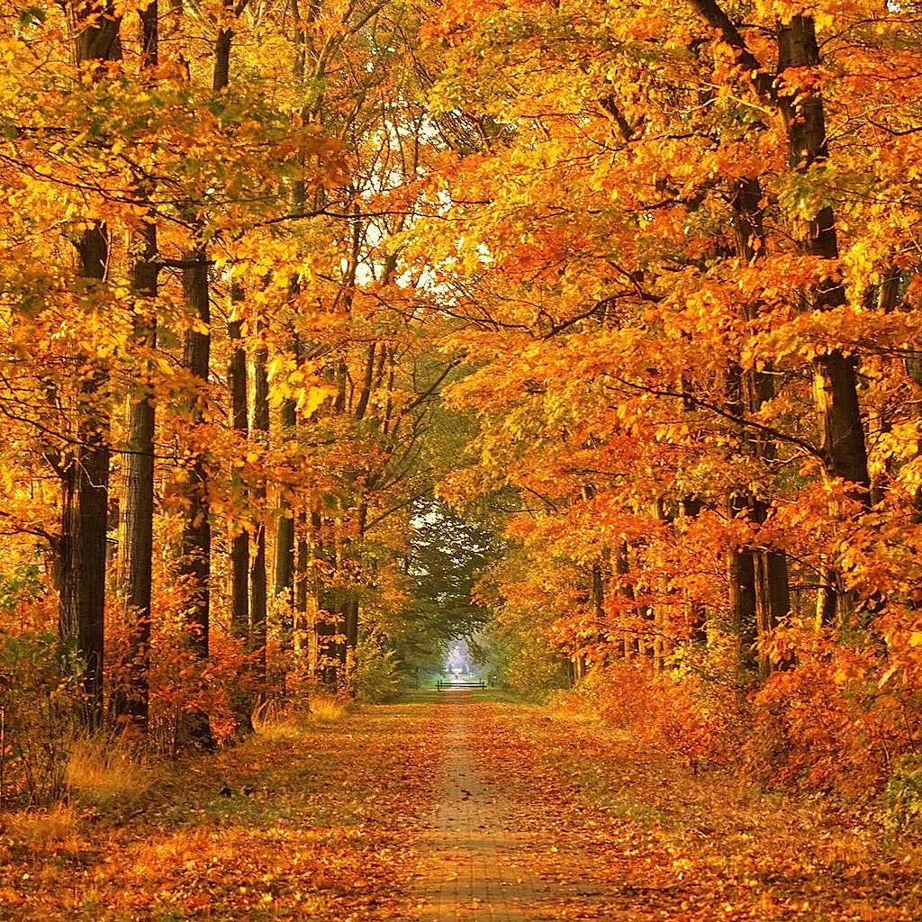 Fall Months: Jonpenfold.com: Ten Reasons Why October Is The Best Month